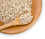 Grains of barley Stock Image