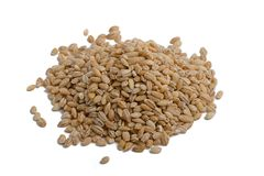 Grains of barley. On a white background Royalty Free Stock Photography