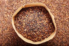 Grains of barley malt for beer production. Chocolate barley malt, used for the production of craft and home beer. stock image