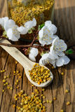 Grains of bee pollen in jar and wooden spoon on wooden table with flowers of spring trees. Apitherapy. Bee products. Royalty Free Stock Photography