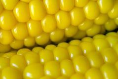 Grains bouillis Photo libre de droits