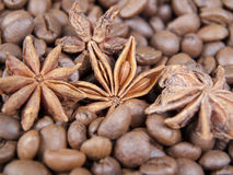 Anisetree in coffee. Among grains of coffee the anisetree is located Stock Photography