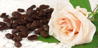 Grains of coffee with a white rose Stock Images