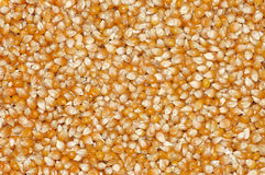 Grains of corn for a background. Royalty Free Stock Image