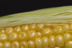 Grains of corn cob. Macro Royalty Free Stock Image