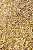 Grains of corn detailed Stock Image