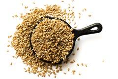 Grains de blé Photos stock