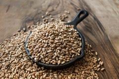 Grains de blé Image libre de droits