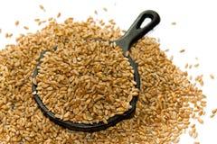 Grains de blé Photo libre de droits