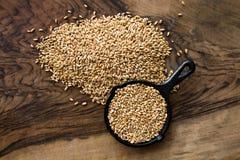 Grains de blé Photographie stock