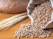 Grains de blé sur le fond en bois de planche Images libres de droits
