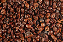 Grains de café 01 Image stock
