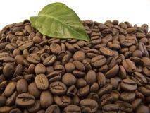 Grains de café avec la lame de café Photographie stock libre de droits
