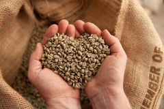 Grains de café crus se tenant dans des mains - coeur - coffeelover Images libres de droits