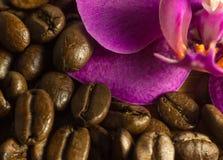 Grains de café détail et orchidée Image stock