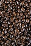 Grains de café de café express Photo stock