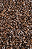 Grains de café de café express Photographie stock libre de droits