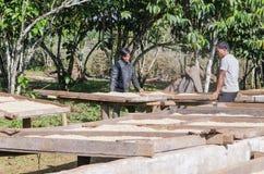 Grains de café de séchage Images stock