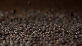 Grains de café en baisse dans le mouvement lent banque de vidéos