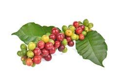 Grains de café frais d'isolement sur le fond blanc image stock
