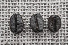 Grains de café frais, foyer sélectif Photos stock