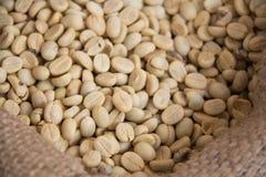 Grains de café non rôtis Photographie stock libre de droits