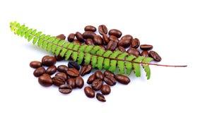 Grains de café normaux d'Aromated Photo stock