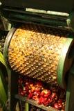Grains de café organiques. image libre de droits