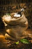 Grains de café organiques rôtis frais Image libre de droits