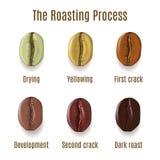 Grains de café réalistes d'isolement sur le fond blanc Étapes de r illustration stock