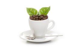 Grains de café rôtis par noir d'arabica Photographie stock libre de droits