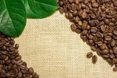 Grains de café se trouvant sur renvoyer Photo libre de droits