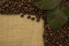 Grains de café se trouvant sur renvoyer Image stock