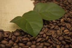 Grains de café se trouvant sur renvoyer Photographie stock