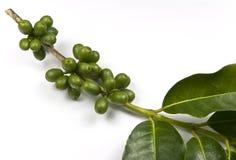 Grains de café verts Photos libres de droits