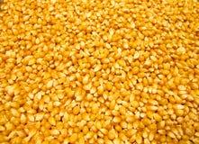 Grains de maïs éclaté Image libre de droits