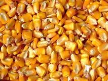 Grains de maïs Image libre de droits