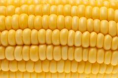 Grains de maïs avec le plan rapproché de gouttelette d'eau Photographie stock
