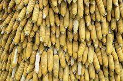 Grains de maïs avec le plan rapproché de gouttelette d'eau Photo libre de droits