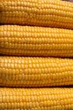 Grains de maïs avec le plan rapproché de gouttelette d'eau Photos libres de droits