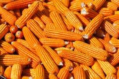 Grains de maïs avec le plan rapproché de gouttelette d'eau Photo stock