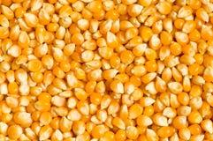 grains de maïs lumineux disposés Images libres de droits