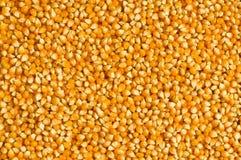 grains de maïs lumineux disposés Photographie stock libre de droits