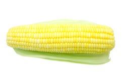 Grains de maïs mûr Image stock