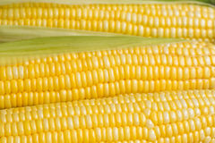 Grains de maïs mûr frais Photos libres de droits