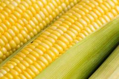 Grains de maïs mûr frais Photo libre de droits