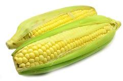 Grains de photo mûre de maïs de plan rapproché de maïs Photo libre de droits