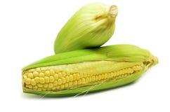 Grains de photo mûre de maïs de plan rapproché de maïs Photos libres de droits