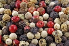 Grains de poivre - famille de poivre Photo libre de droits
