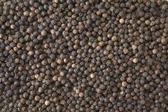 Grains de poivre noirs Image stock